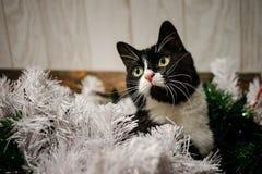Jouets sur l'arbre de Noël pendant la nouvelle année Jouets de Noël et un chat noir An neuf image libre de droits
