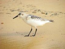Joueur de pipeau de sable Photographie stock libre de droits