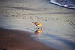 Joueur de pipeau de sable sur la plage Image stock