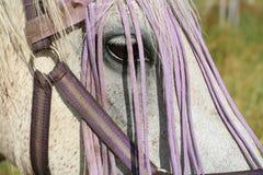 Joueur le cheval Images stock