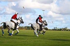 Joueur mâle de polo Photographie stock libre de droits