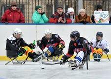 Joueurs de hockey de traîneau sur le fond des spectateurs Photos libres de droits