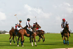 Joueurs mâles de polo Photos stock