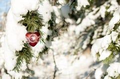 Jouez le coeur avec la dentelle accrochant sur une branche de pin dans la forêt Val Images libres de droits