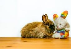 Jouez le lapin de Pâques et le vrai kit de lapin avec l'espace de copie pour le texte Photo stock