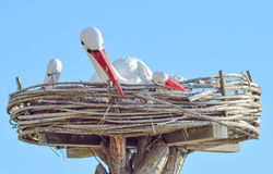 Jouez le nid d'une cigogne avec des oiseaux là-dessus Image libre de droits