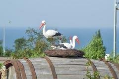 Jouez le nid d'une cigogne avec des oiseaux là-dessus Images libres de droits