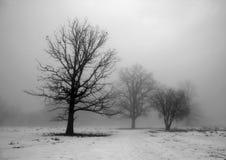Jour brumeux Photographie stock libre de droits