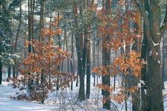 Jour brumeux d'automne forêt grise d'hiver photo stock