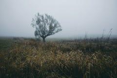 Jour brumeux d'automne sombre foncé sur le champ avec l'arbre isolé photographie stock