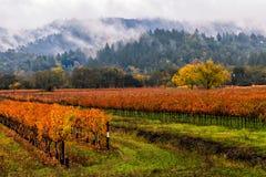 Jour brumeux dans Napa Valley image stock
