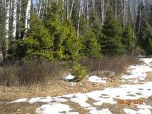 Jour chaud clair de ressort dans les bois photographie stock libre de droits
