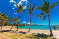 Jour chaud sur la plage sablonneuse avec des palmiers, plage d'Airlie, Pentecôte Images libres de droits