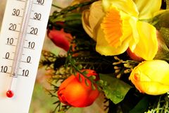 Jour d'été chaud, thermomètre de la température sur le fond des fleurs lumineuses de jardin Les fleurs d'été fleurissent,  photo libre de droits