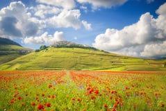 Jour d'été dans le beau et coloré secteur des Di de Castelluccio Photo stock