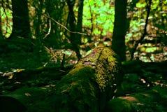 Jour d'été dans les bois image libre de droits