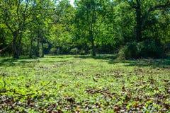 Jour d'été de forêt Photos stock