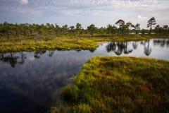 Jour d'été ensoleillé dans le lac de marais photo stock