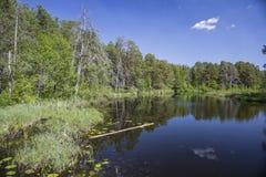 Jour d'été, un lac de forêt avec les banques accidentées, envahies avec l'herbe Photos libres de droits