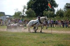 Jour d'agriculture Alden 2010 Biesen Photo libre de droits