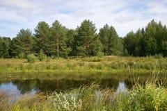 Jour d'août sur le vieux lit de la rivière de Vetluga Région de Kostroma, Russie Photos libres de droits