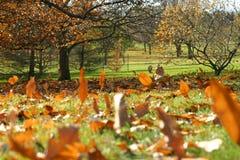 Jour d'automne Photos stock