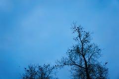Jour d'automne Photographie stock