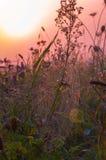 Jour d'automne Photo stock
