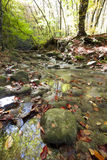 Jour d'automne dans le bois avec un flot Photo libre de droits