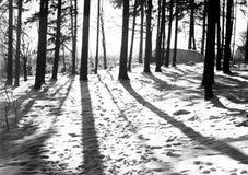 Jour d'hiver Photos stock