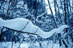 Jour d'hiver. Image libre de droits