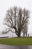 Jour d'hiver au bord de lac Image stock