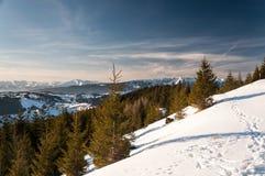 Jour d'hiver clair Photo stock