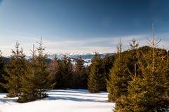 Jour d'hiver clair Photographie stock libre de droits