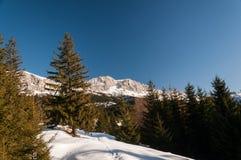 Jour d'hiver clair Photos libres de droits