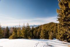 Jour d'hiver clair Photo libre de droits