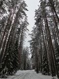 Jour d'hiver dans la forêt Photo stock