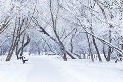 Jour d'hiver de Milou Photographie stock