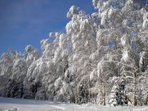 Jour d'hiver, forêt neigeuse, modèles givrés sur des arbres, ciel clair bleu, neige blanche pelucheuse, prochain Noël, recourbeme image stock