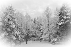 Jour d'hiver frais en Caroline du Nord Image stock