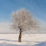Jour d'hiver froid Photos libres de droits