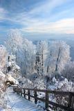 Jour d'hiver merveilleux Images libres de droits