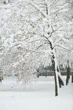 Jour d'hiver parfait Photo stock