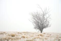 Jour d'hiver sombre photographie stock