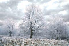 Jour d'hiver sombre Image libre de droits