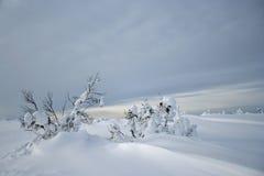 Jour d'hiver sombre Photo stock