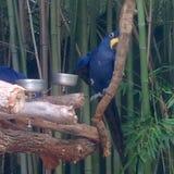 Jour d'oiseau Image stock