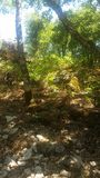 Jour dans les bois Images stock