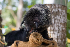 Jour de détente de Bearcat Images stock