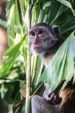 Jour de détente de singe Photographie stock libre de droits